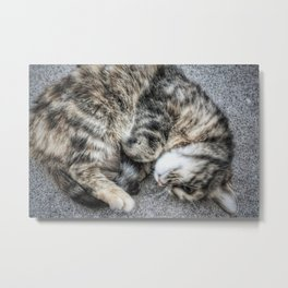 House Cat, Athens, 2017 Metal Print