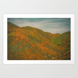 California Poppies 035 Art Print