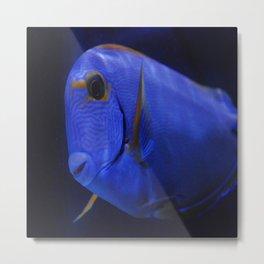 blue Tang 3 Metal Print