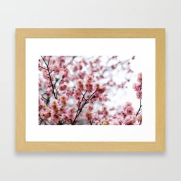 The First Bloom Framed Art Print