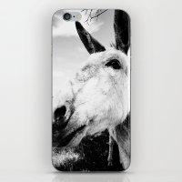 donkey iPhone & iPod Skins featuring Donkey by Irislynn