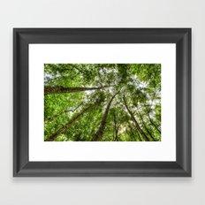 Nature Reaching For The Sky Framed Art Print