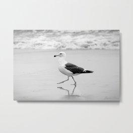Seagull (Gull) Metal Print