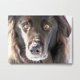 Dog Close-up Metal Print