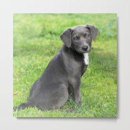 Adorable Grey Puppy Metal Print