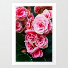 Gentle Blushing Roses Art Print