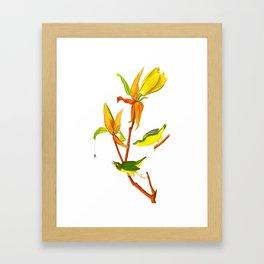 Kentucky Warbler Bird Framed Art Print