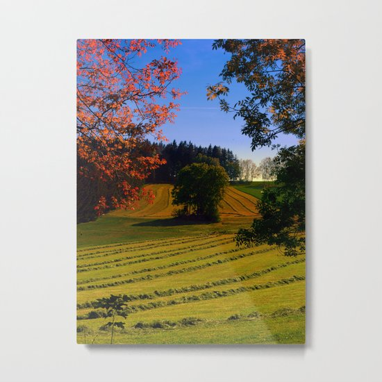 Tree watching in springtime Metal Print