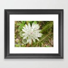 woodland flower Framed Art Print