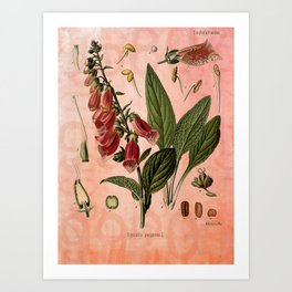 Vintage Botanical Illustration Collage, Foxgloves, Digitalis Purpurea Art Print