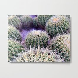 Mexican Cactus - Cabo San Lucas Metal Print