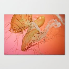 even more jellyfish Canvas Print