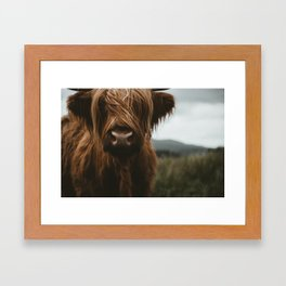 Scottish Highland Cattle Framed Art Print