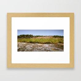 Koster's flowers Framed Art Print