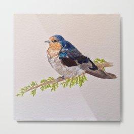 Birds: Swallow Series | Welcome Swallow Metal Print