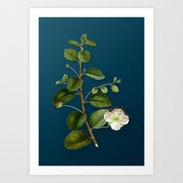 Vintage Caper Plant Botanical Illustration on Teal Art Print