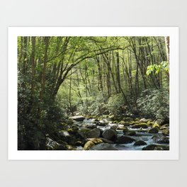 Deep in the Forrest Art Print