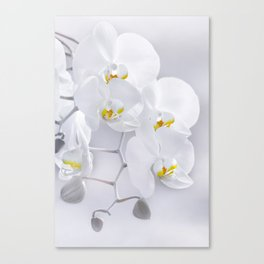 Orchid white macro 029 Canvas Print