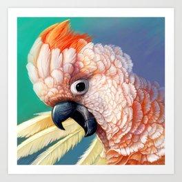 Moluccan Cockatoo realistic painting Art Print