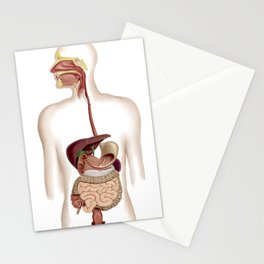 Anatomy of human digestive system. Stationery Cards