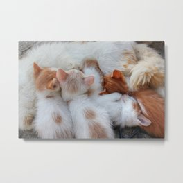 Little Balls of Fur! Metal Print