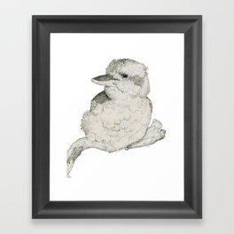 Contended Kookaburra Framed Art Print