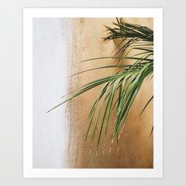 Palme Kunstdrucke