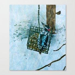 Hairy Woodpecker Canvas Print