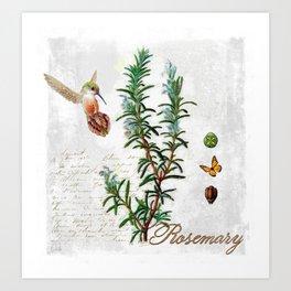 Cottage Style Rosemary, Hummingbird, Butterfly, Herbal Botanical Illustration Art Print