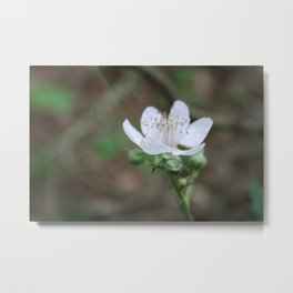 Light Pink Metal Print