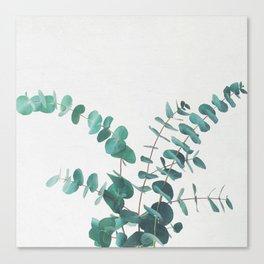 Eucalyptus II Canvas Print