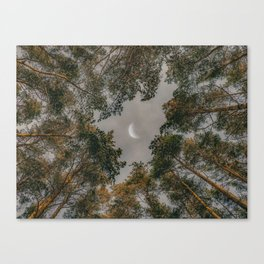 Moon through tree tops Canvas Print