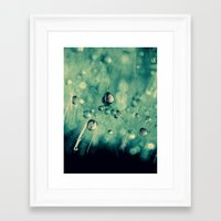 dandelion Framed Art Prints featuring dandelion by Ingrid Beddoes