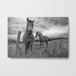 Irish Horses Metal Print