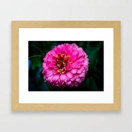 Marry-Pink Framed Art Print