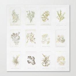 Naturalist Mosses Canvas Print