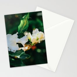 Coffee Rose Stationery Cards