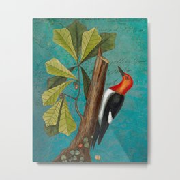 Red Headed Woodpecker with Oak, Natural History and Botanical collage Metal Print
