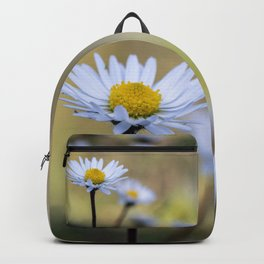 Delicate daisy flowers Backpack