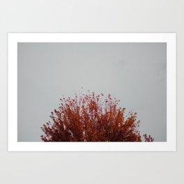Autumnal Tree Art Print