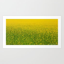 Mustard Field (of Yellow and Green) Art Print