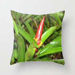The Bromeliad (the air) plant in flower - El Yunque rainforest PR Throw Pillow