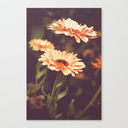 Salmon Colored Fields Canvas Print