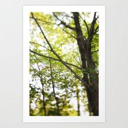 More trees! Art Print