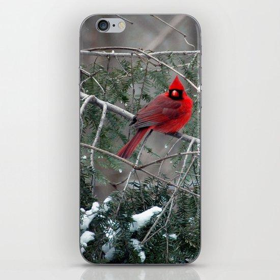Winter Cardinal iPhone & iPod Skin