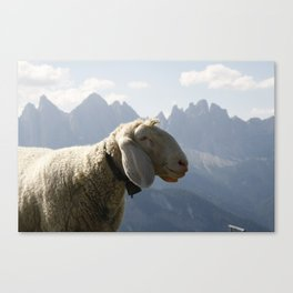 Sheep Before South Tyrol Mountains Canvas Print
