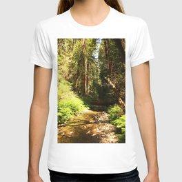 A Muir Woods Scene T-shirt