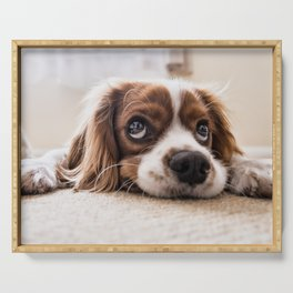 Cute dog with Big Innocent Eyes Serving Tray