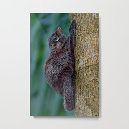 Malayan Flying Lemur Metal Print
