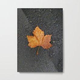 Sycamore tree leaf on ground Metal Print